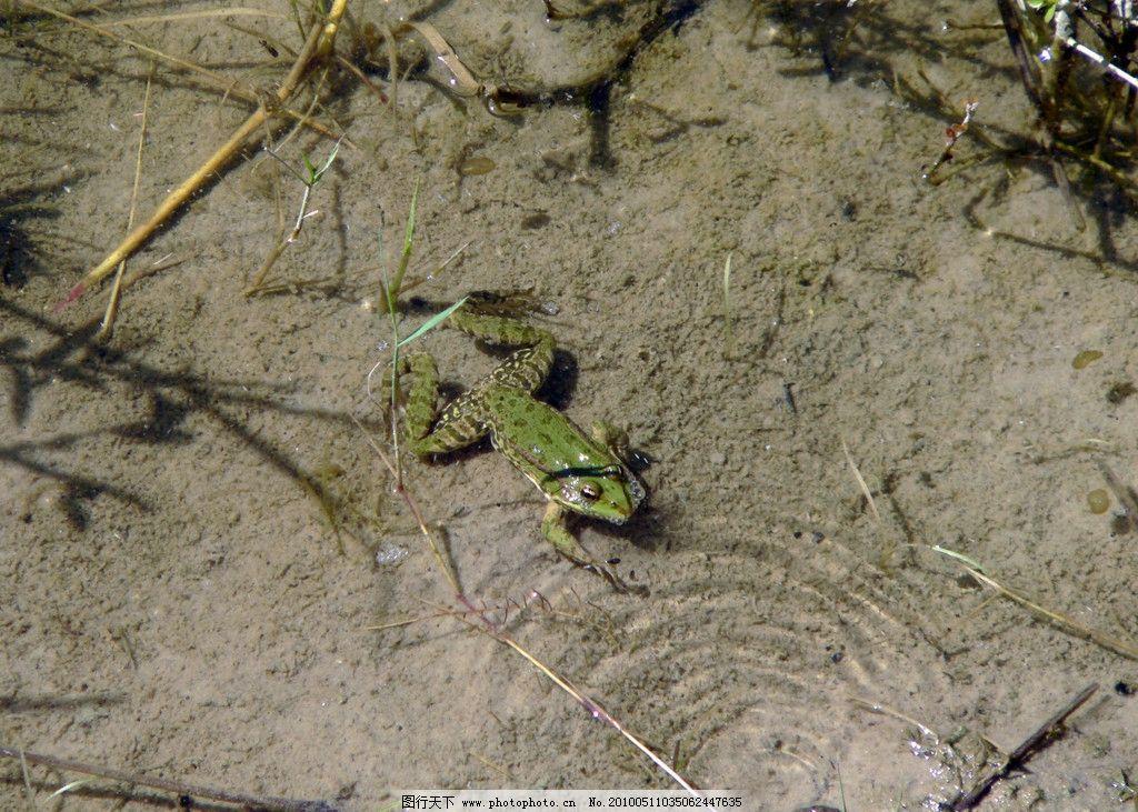 青蛙 人 可爱 野生动物 生物世界 摄影 72dpi jpg