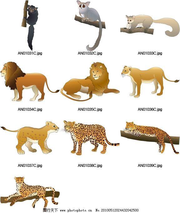 矢量动物素材图片