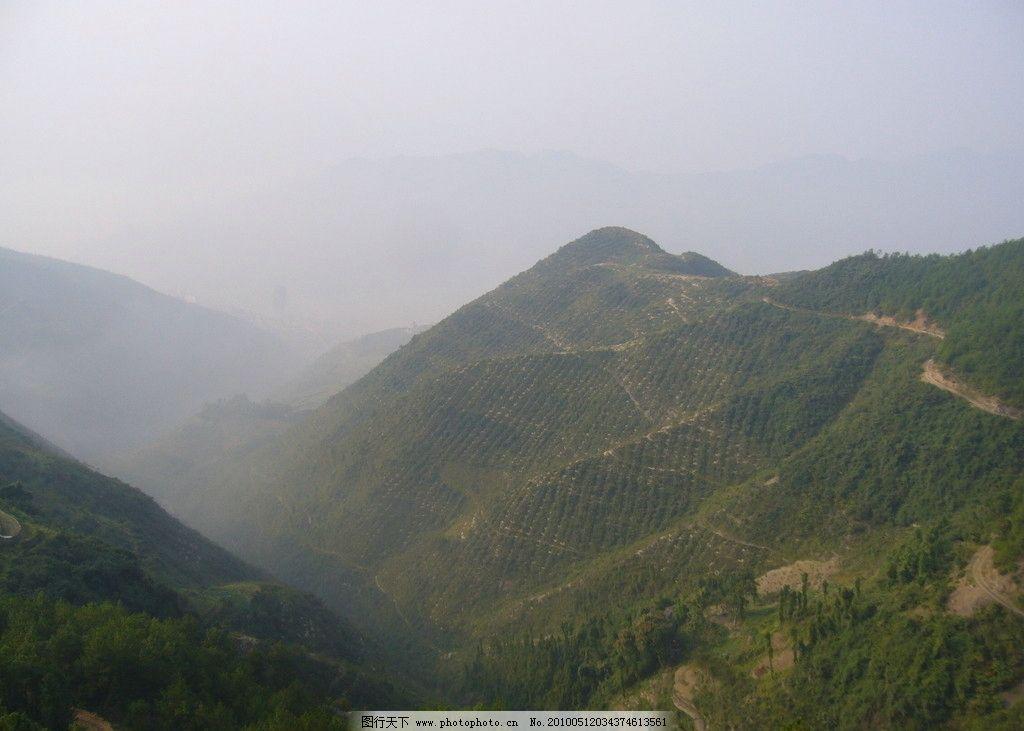 大山 森林 树 树木 树林 植物 植被 生物 风景 美丽 原始森林