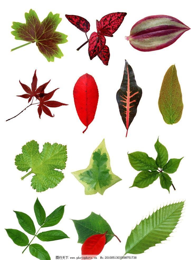 彩色植物叶子 植物叶子 叶子上的水珠 秋季 美丽的 美景 清洁的 特写图片