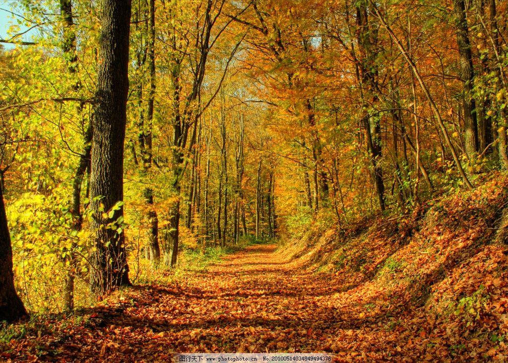 秋天的小径 秋天 树林 小径 黄叶 自然风景 自然景观 摄影 72dpi jpg