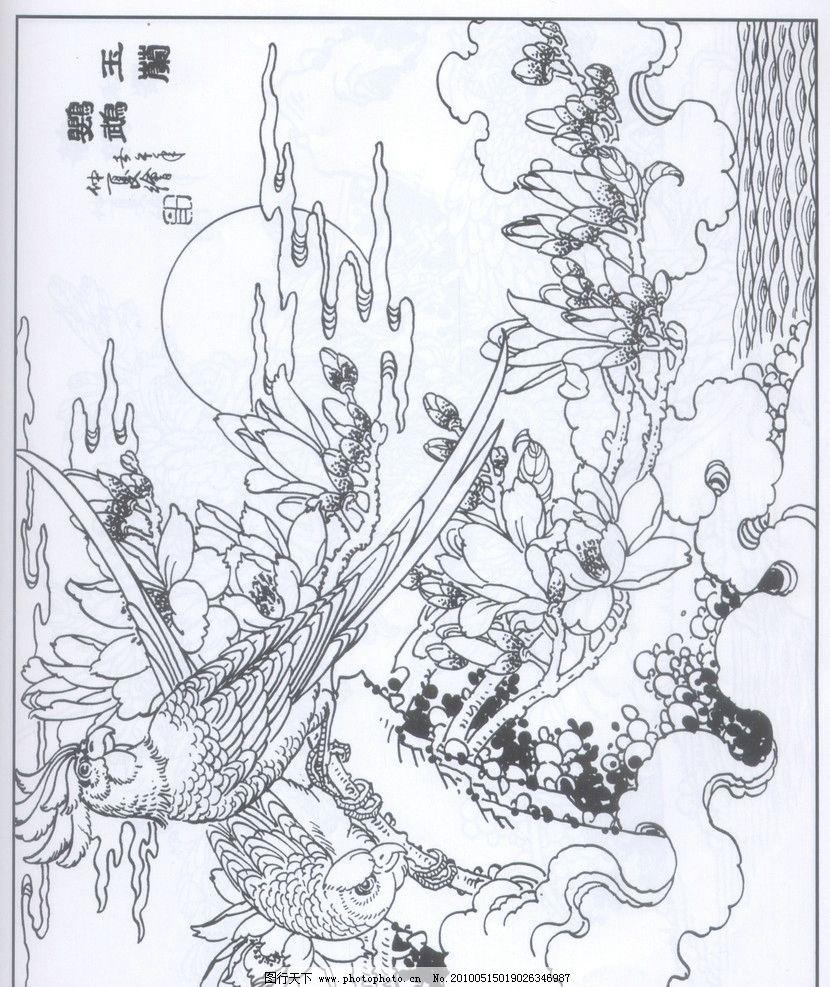 玉兰鹦鹉 水 玉兰树 玉兰 鹦鹉 线描 工笔画 黑白 白描 线条 陈金莺