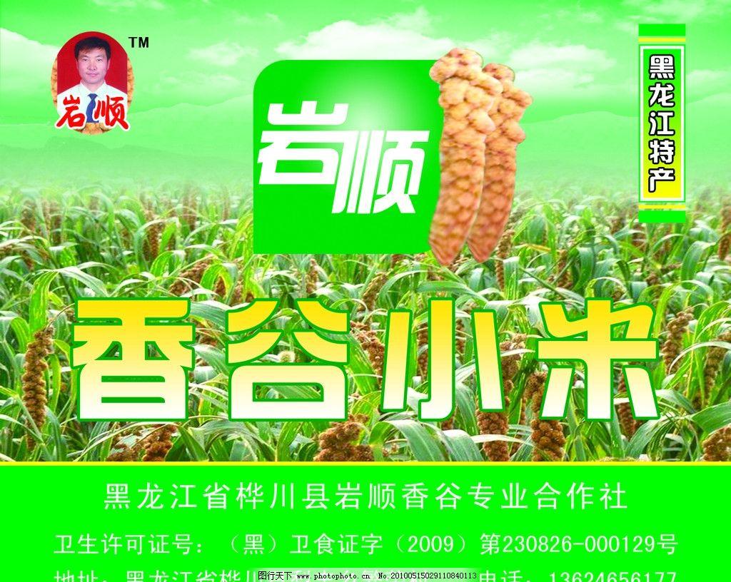 香谷小米 包装 麦穗 黑龙江 特产 包装设计 广告设计模板 源文件