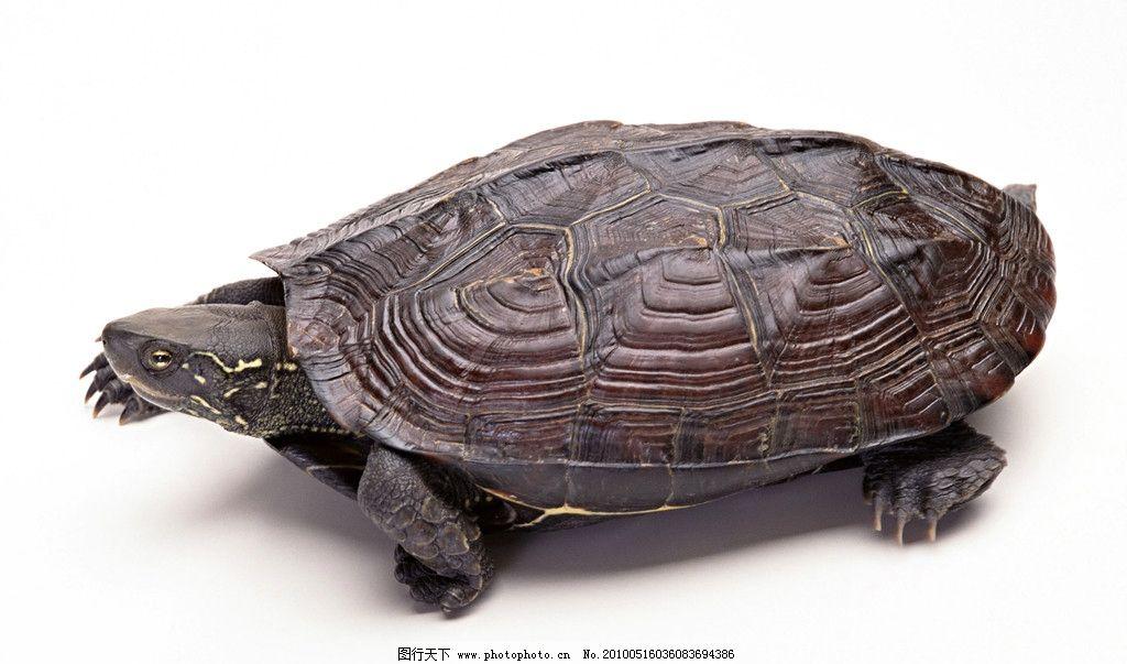 光盘手工制作乌龟步骤