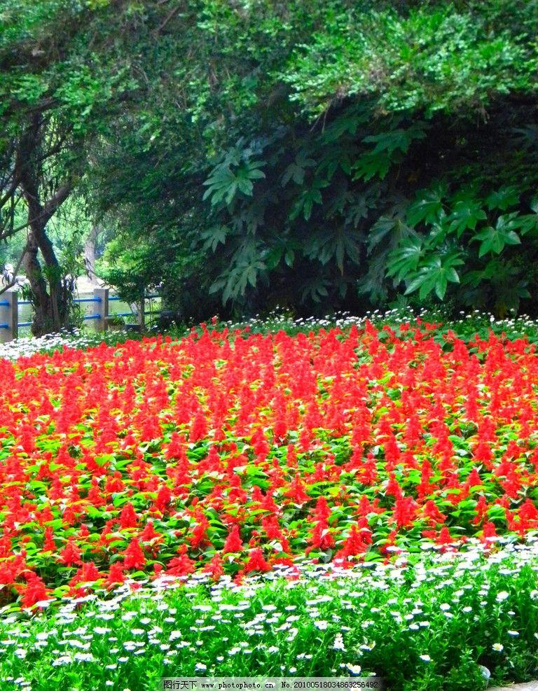 公园景观 红花绿叶 小白菊 绿叶树木 自然风景 自然景观 摄影 300dpi
