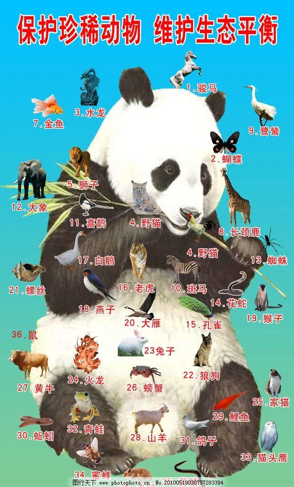 36动物猜迷图 熊猫 野生动物 迷语 国内广告设计 广告设计模板