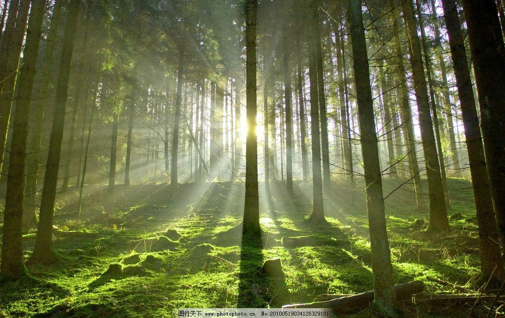 晨幕深林 早晨 早上 雾 树木 阳光 草地 野外 晨光 自然风景 旅游摄影