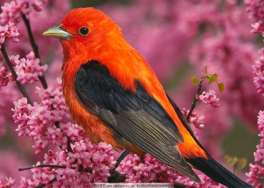 小鸟 鸟类 飞的动物 动物 生物世界 摄影 100dpi jpg