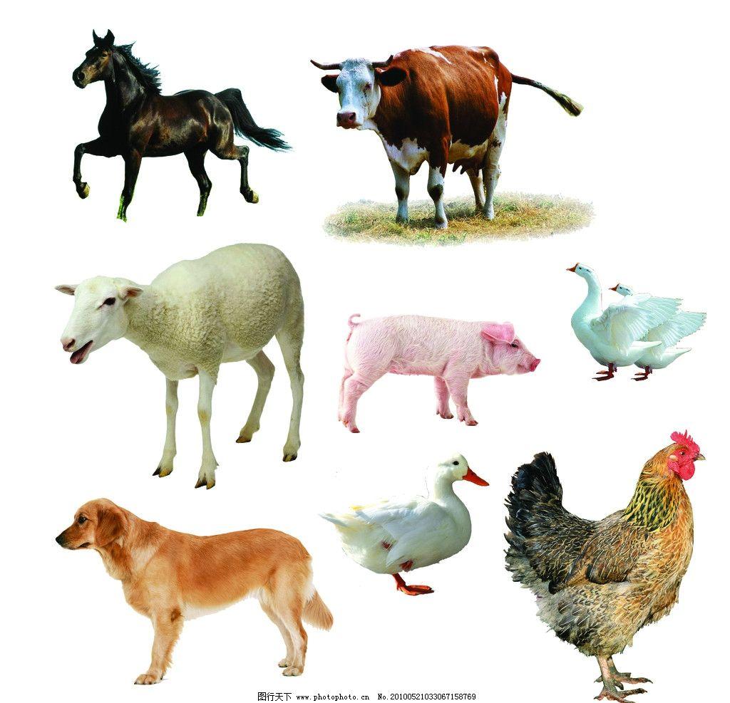 动物有哪些种类