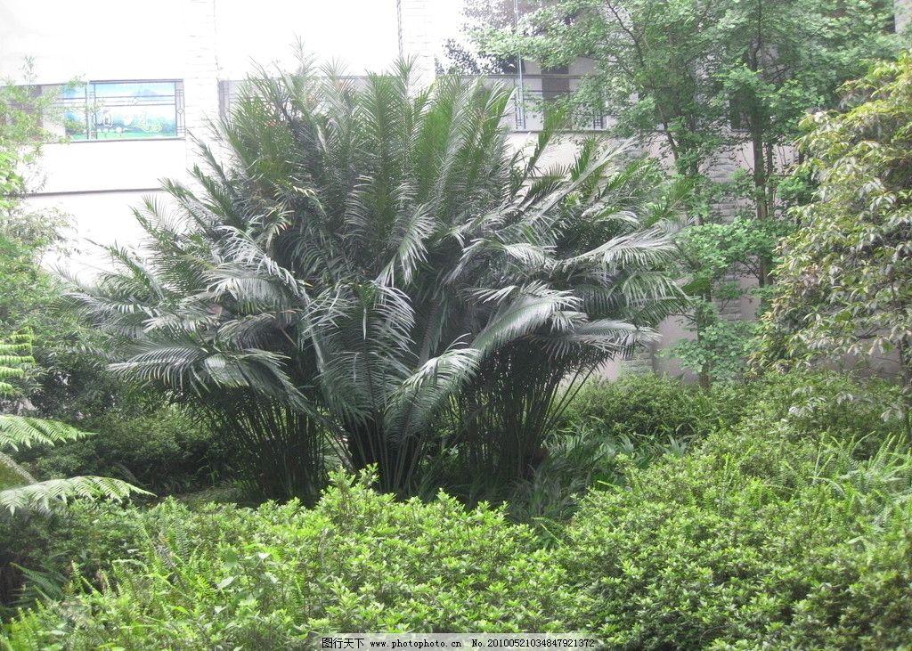 铁树 自然风景 自然景观 摄影 180dpi jpg