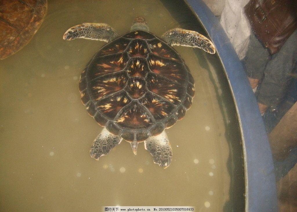 乌龟 龟 野生动物 生物世界 摄影 96dpi jpg