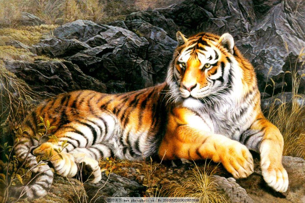 老虎油画 装饰画 老虎写真 老虎 动物油画 无框画 风景 喷绘 写真 挂