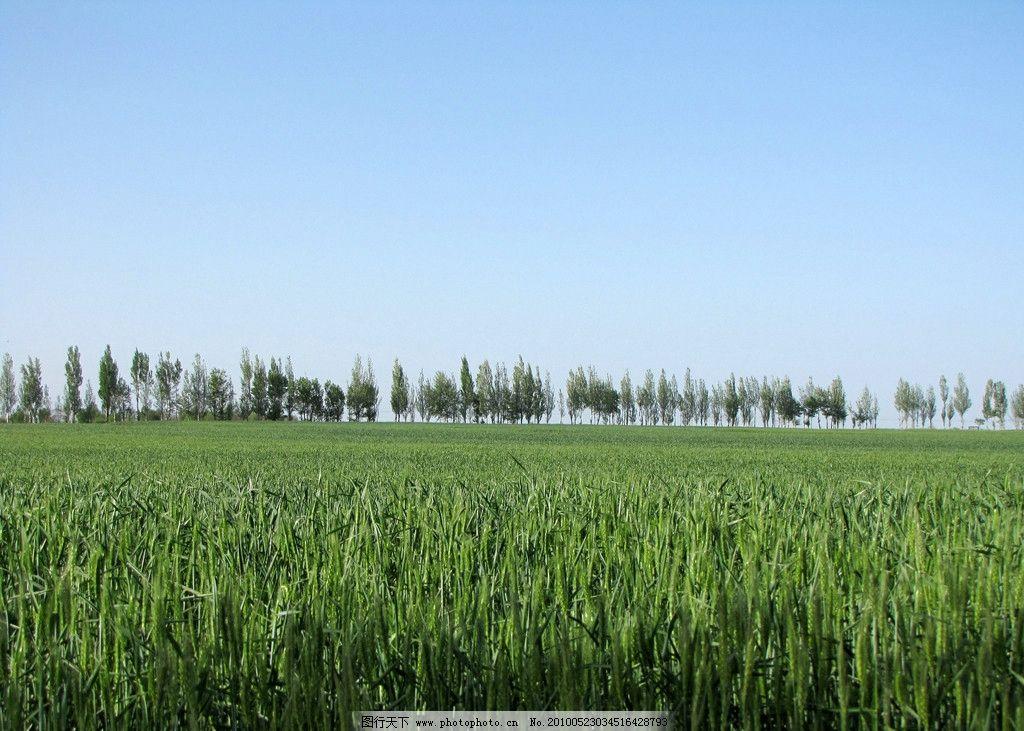 春天的麦田图片