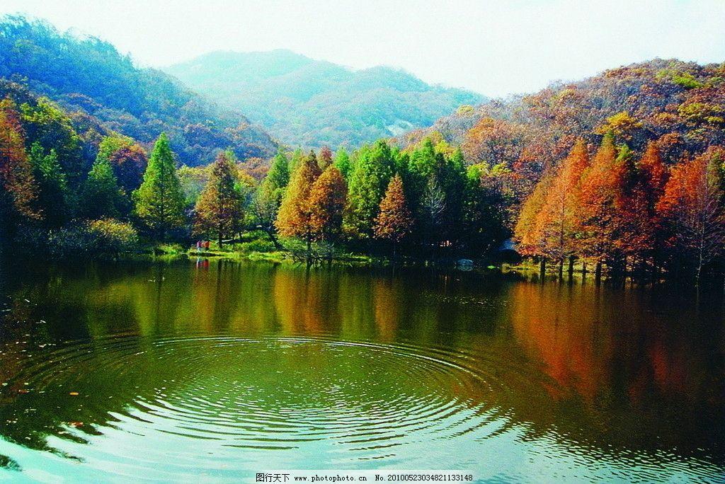 自然风景图片太阳红树大全大图
