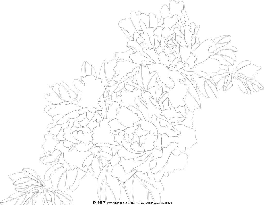 牡丹线描 矢量 牡丹花