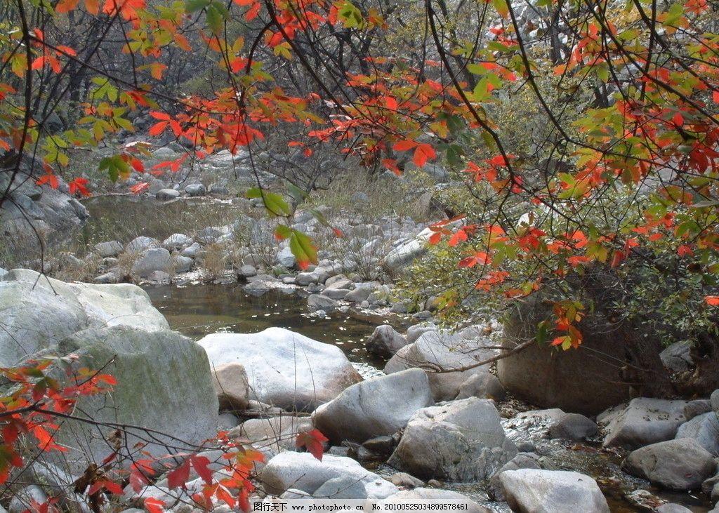美景 红叶 石头 小石 树林 小河 嵩县风景 摄影
