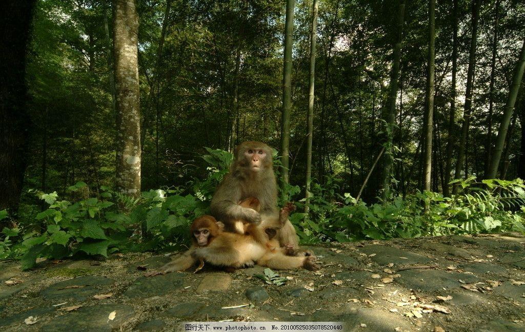 猴子 树林 森林 动物 小猴 野生动物 生物世界 摄影