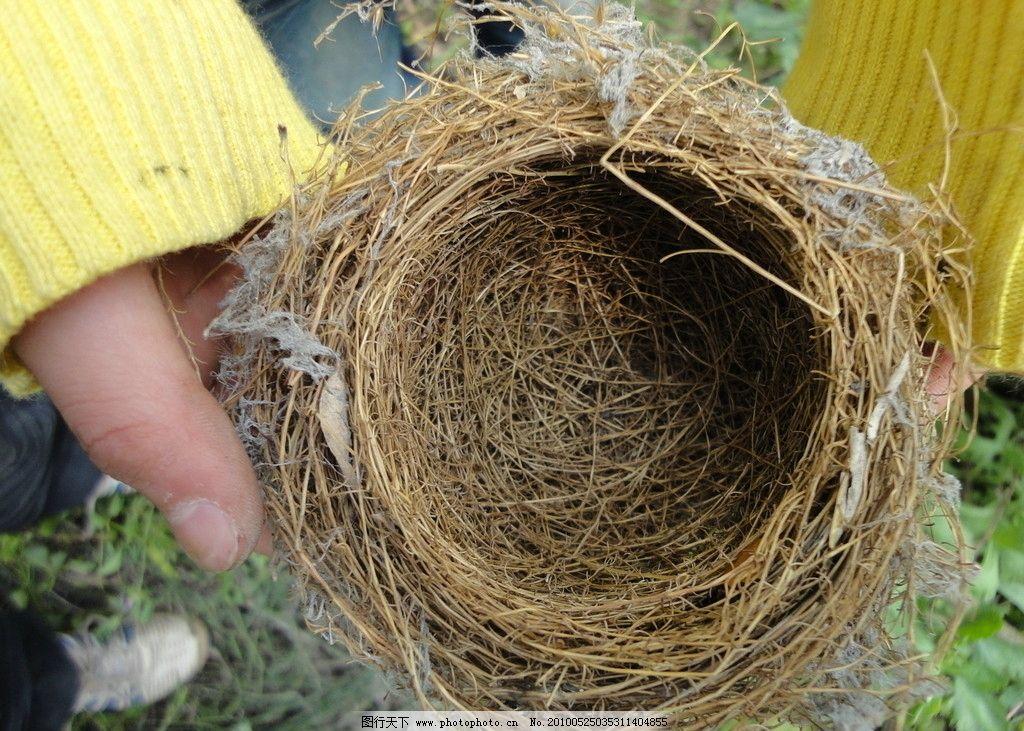 鸟巢 鸟窝 鸟类 生物世界 摄影 72dpi jpg