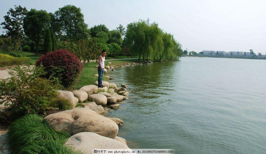 湖边 垂柳 园林 绿荫 树木 木桥 风景 石头 公园 自然风景