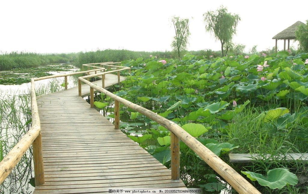 荷塘 荷花 荷叶 垂柳 园林 亭台 树木 木桥 风景 自然风景 自然景观