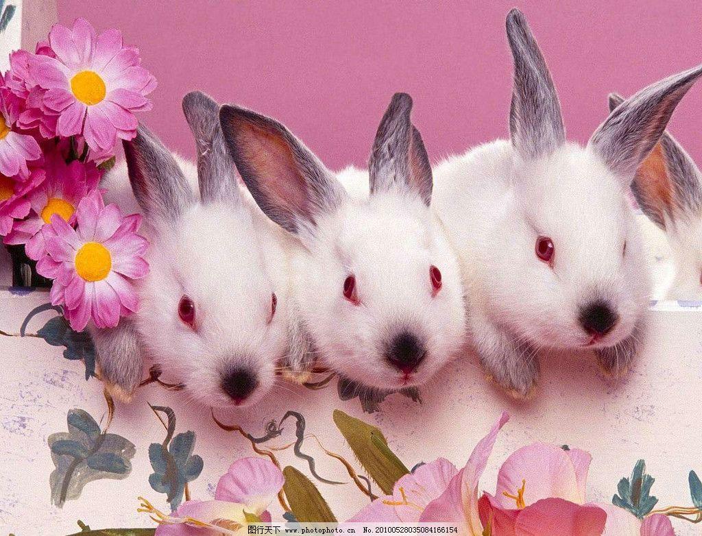 小白兔 可爱 野生动物 生物世界 摄影