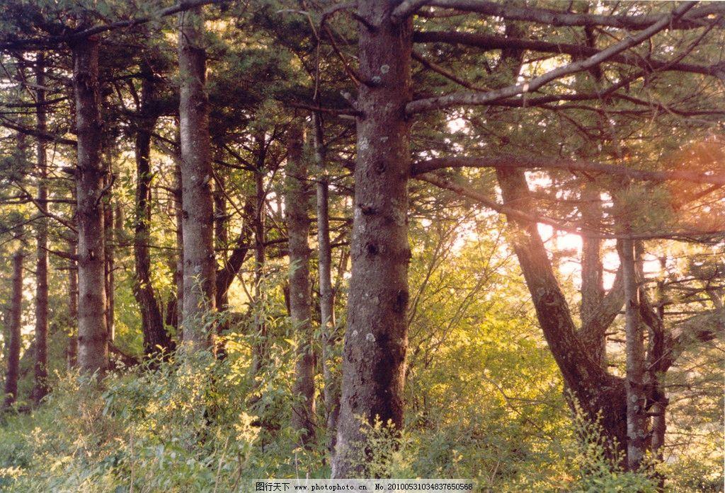 树林 森林 风景 树 秋景 原始森林 阳光 嵩县风景 自然风景 自然景观