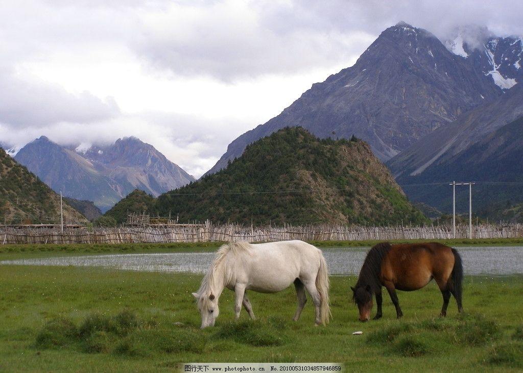 草原白马 草原 马 自然风景 自然景观 摄影 72dpi jpg