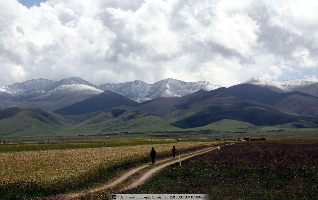 青海湖 高山 白云 小路 游客 雪山 青稞 自然风景 旅游摄影 摄影 72