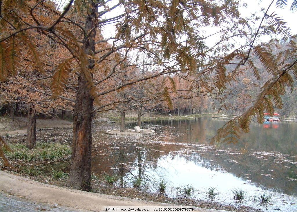 山水 湖泊 树林 红树 秋 嵩县风景 自然风景 自然景观 摄影
