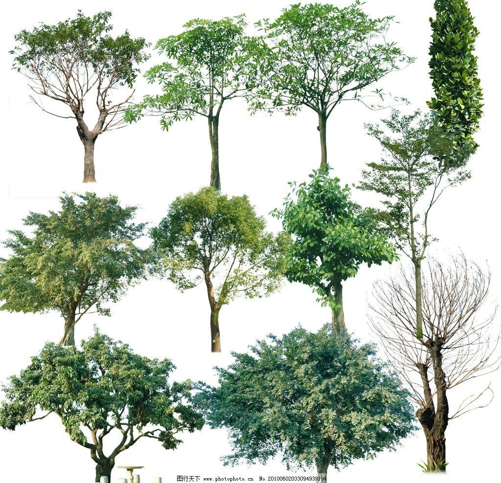 树木psd素材 植物 树木 榕树 落叶树 扁桃树 psd分层素材 源文件 100