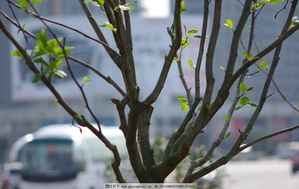 一场中雨让刚刚发芽的树木得到了充分的滋润图片