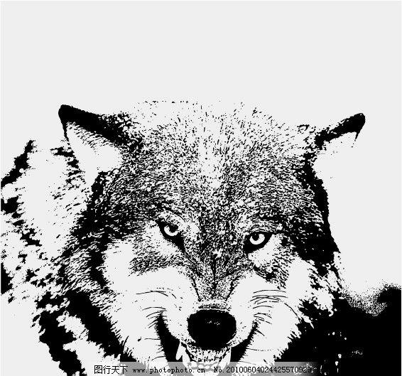 狼 野生动物图片