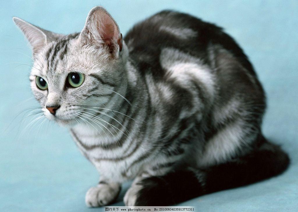 加菲可爱猫咪桌面壁纸