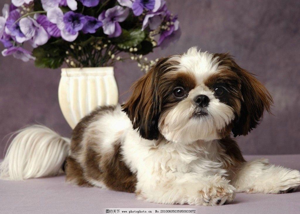 狗狗 动物 衷心 善良 可爱 蝴蝶兰 植物 小动物 家庭 温馨