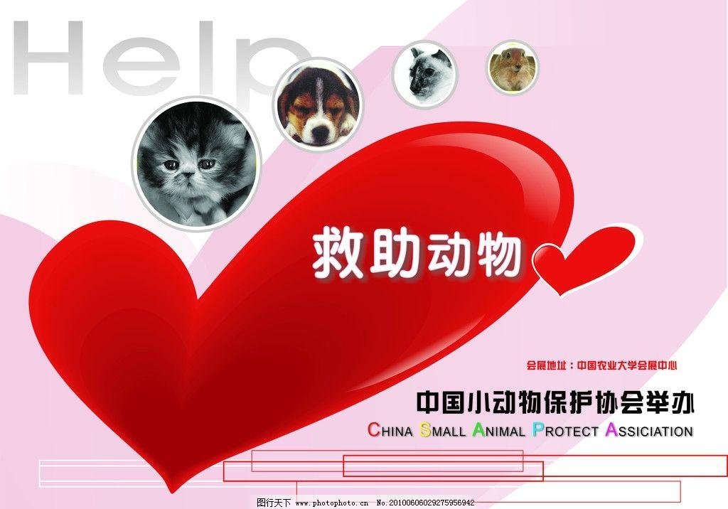 救助动物 中国小动物保护协会