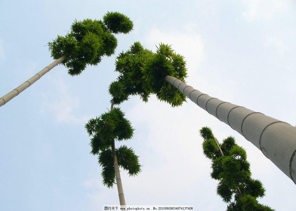 竹子 毛竹 竹林 绿化 园林 生态 自然 景观 风光 绿色 竹业 竹炭 竹纤维 我的原作出售三 自然风景 自然景观 摄影 72DPI JPG