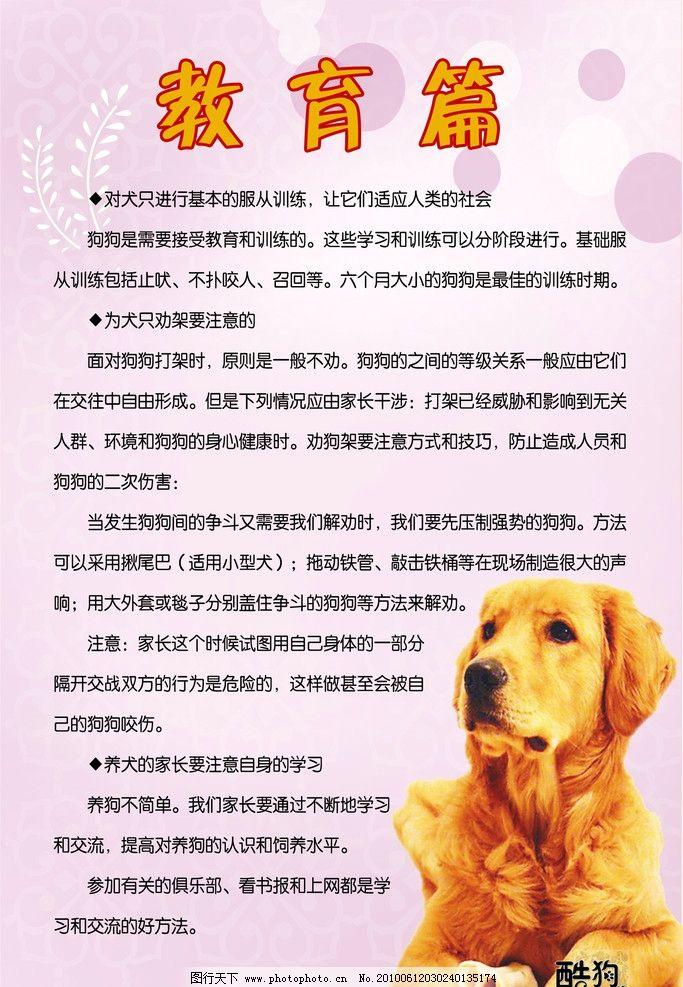教育篇 狗 粉色背景 酷狗 晓婷设计 展版 招贴画 制度 版面 守则 展板