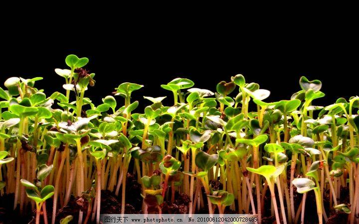 种子生长过程 高清晰