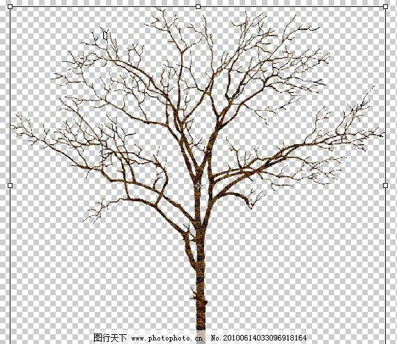 枯树 园林 素材 透明背景 树木 落叶树 冬季 psd flash源文件 其他