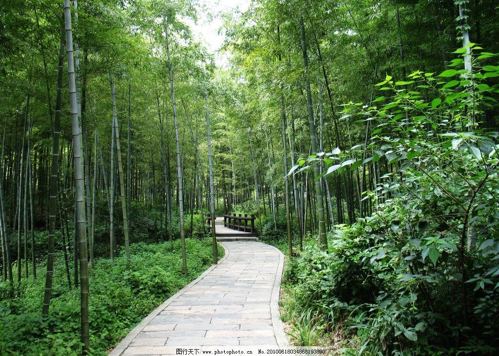 竹林小道 柱子 小路 翠竹 竹林 自然風景 自然景觀 攝影 180dpi jpg