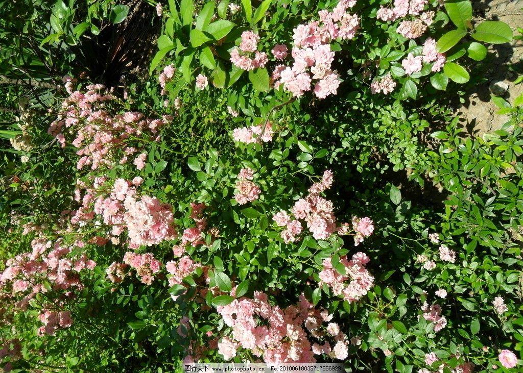 花的海洋 遍地鲜花 绿叶与红花 摄影