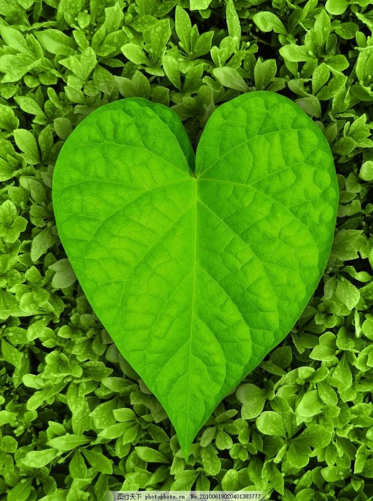 漂亮的绿叶边框高清 漂亮的绿叶边框高清图片 树叶 木头 树木 植物