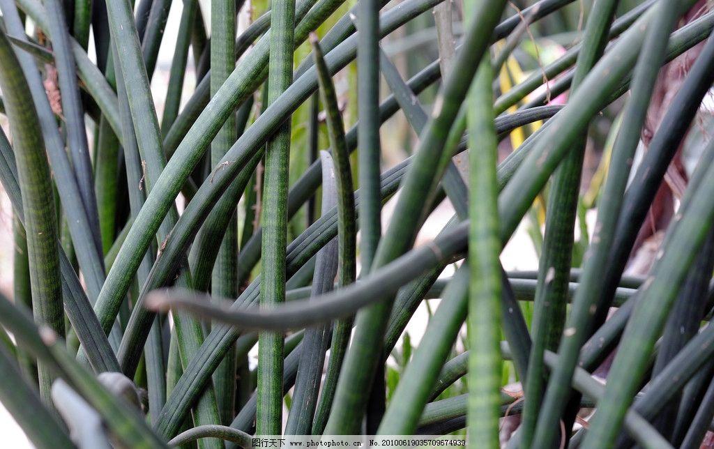 沙漠植物 植物 管状 绿色