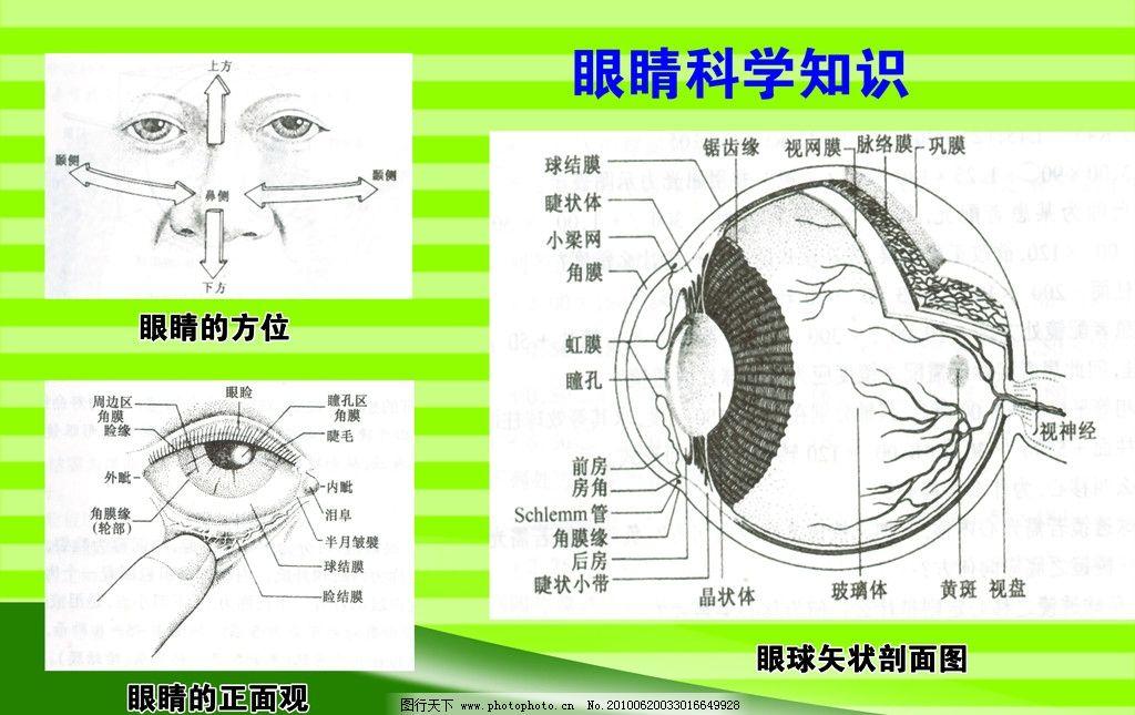眼睛正面结构图片