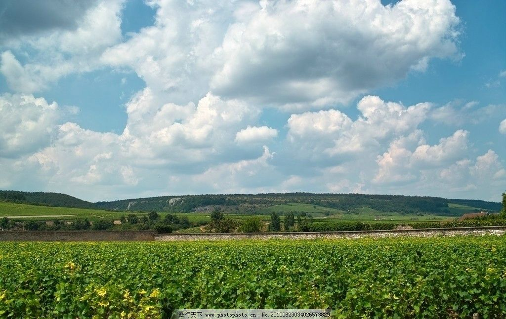 成都/法国第戎葡萄种植园图片