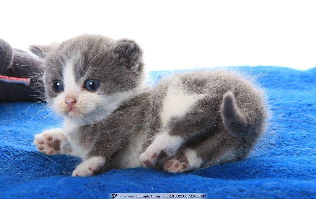 猫猫 猫 动物 家禽家畜 生物世界 摄影 72dpi jpg
