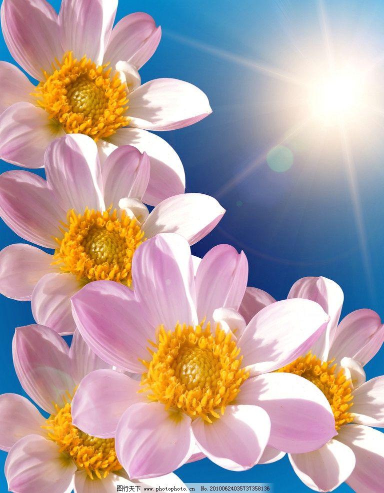 漂亮的花朵高清图片_花草_生物世界_图行天下图库