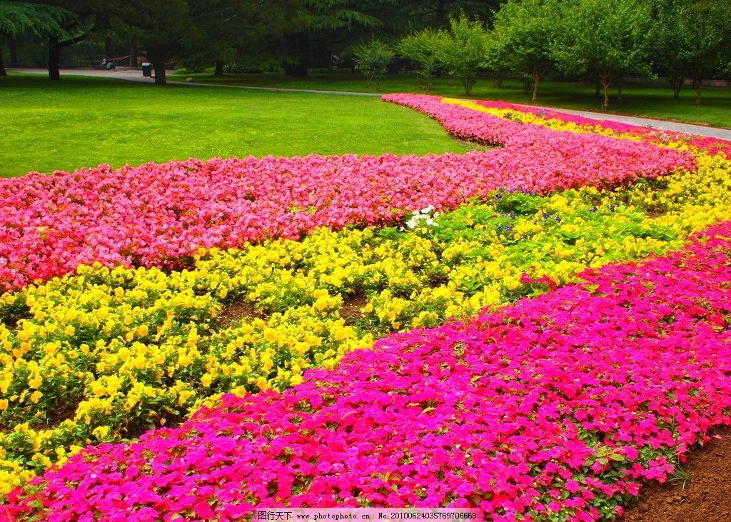 花海 公园一角 春天 红花