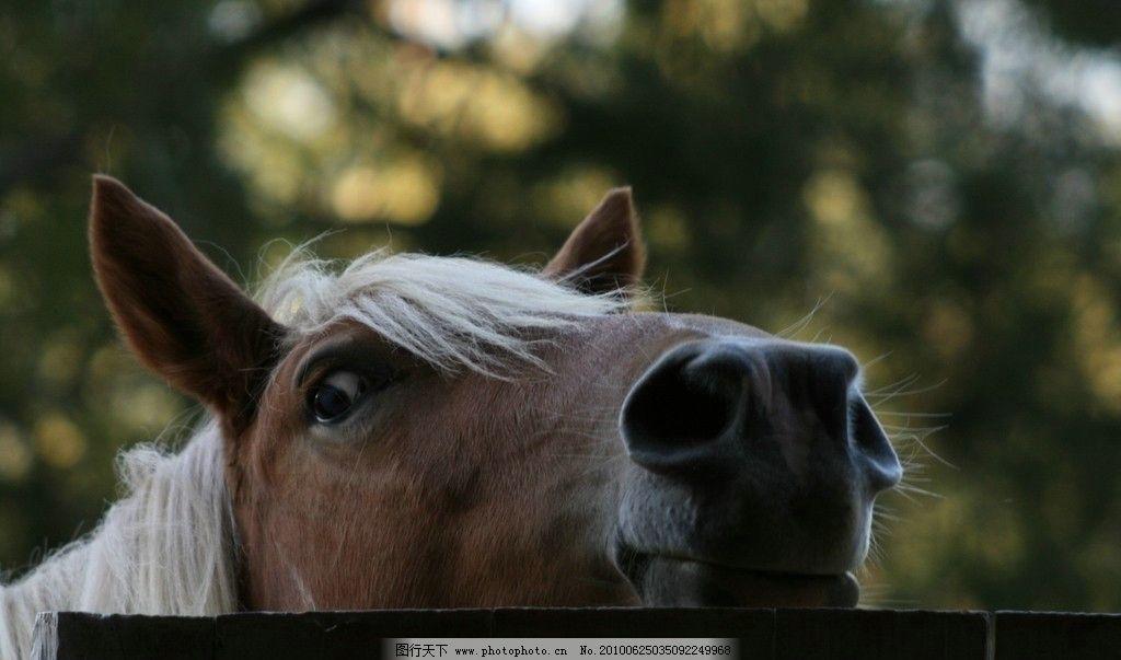 马头 奔腾的马 褐色的马 马头的特写 忧郁的眼神 野生动物 生物世界