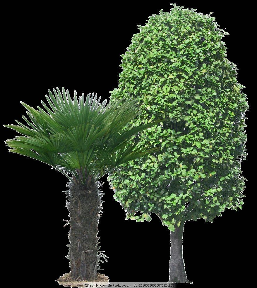 热带树木图片